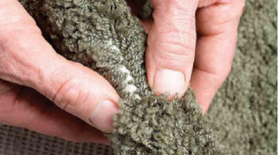 Làm sao để xác định chất lượng của thảm